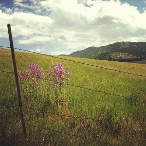 Missoula Walking Trails